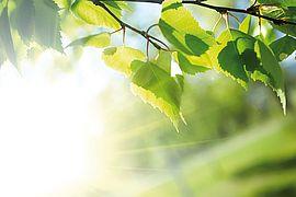 Das Bild zeigt wie sich die Sonne im Blätterdach eines Friedhofs Bann bricht.
